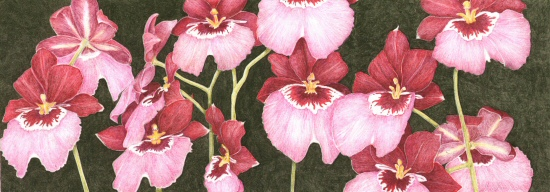Orchids, © 2011 Jess Knowles